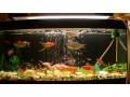 one-glass-aquarium-small-0