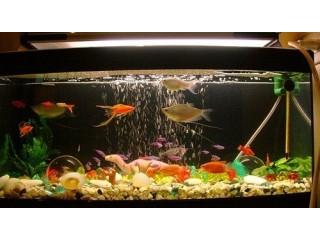 One Glass Aquarium