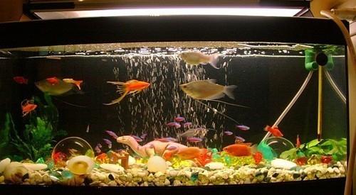 one-glass-aquarium-big-0