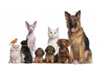 Dog Puppy Pet Shop