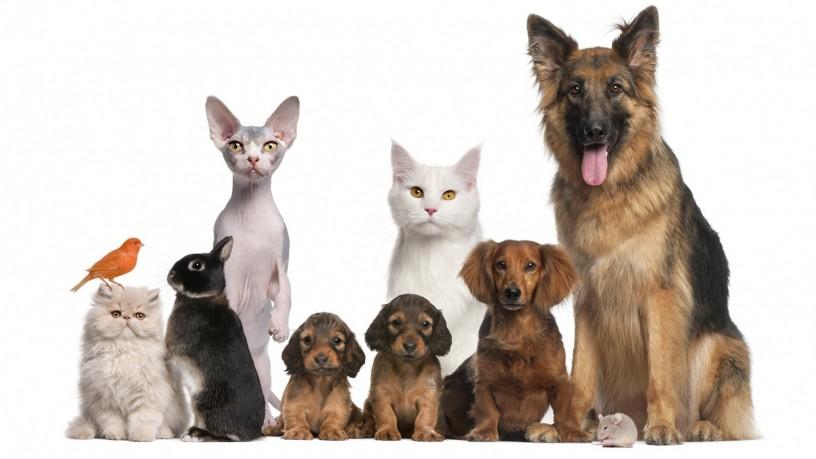 dog-puppy-pet-shop-big-0